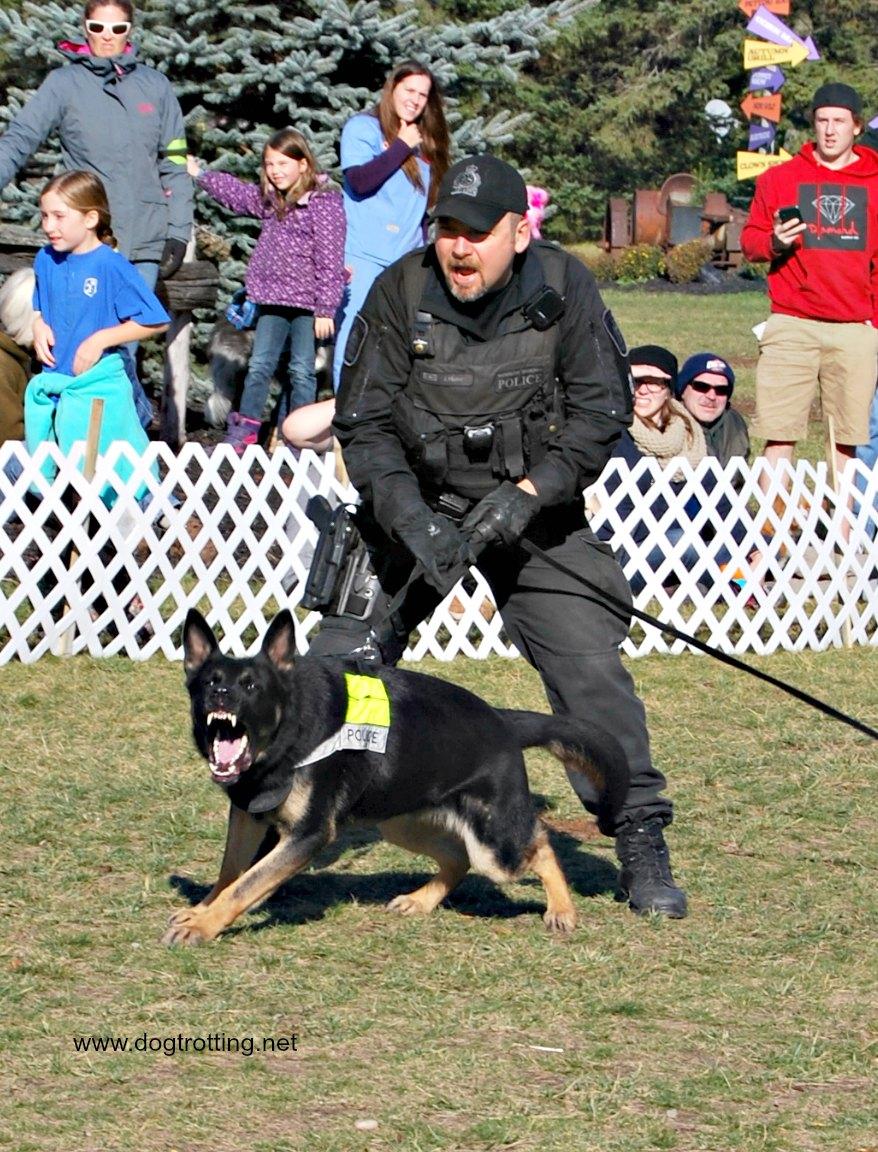 Police dog demonstrations at HOWler event