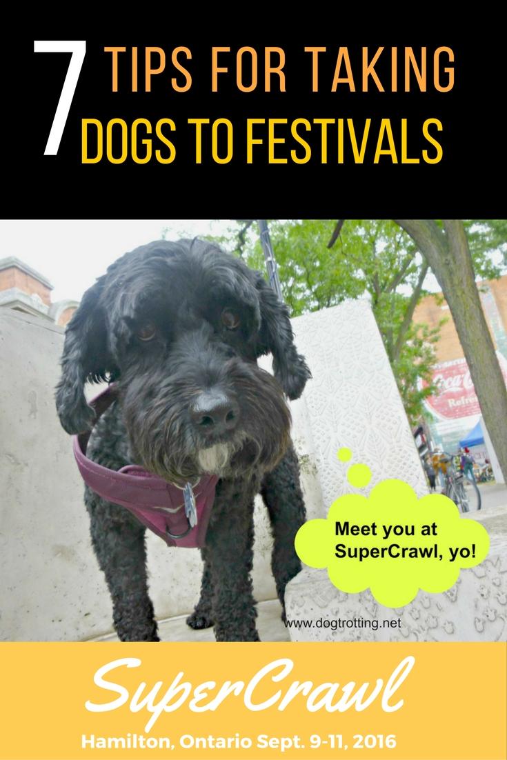 Dog at SuperCrawl outdoor art event