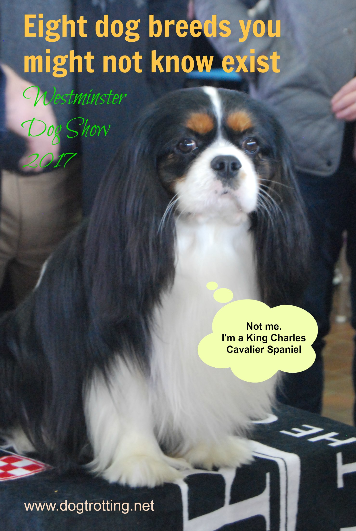 Westminster Dog Show Eight Unusual Breeds