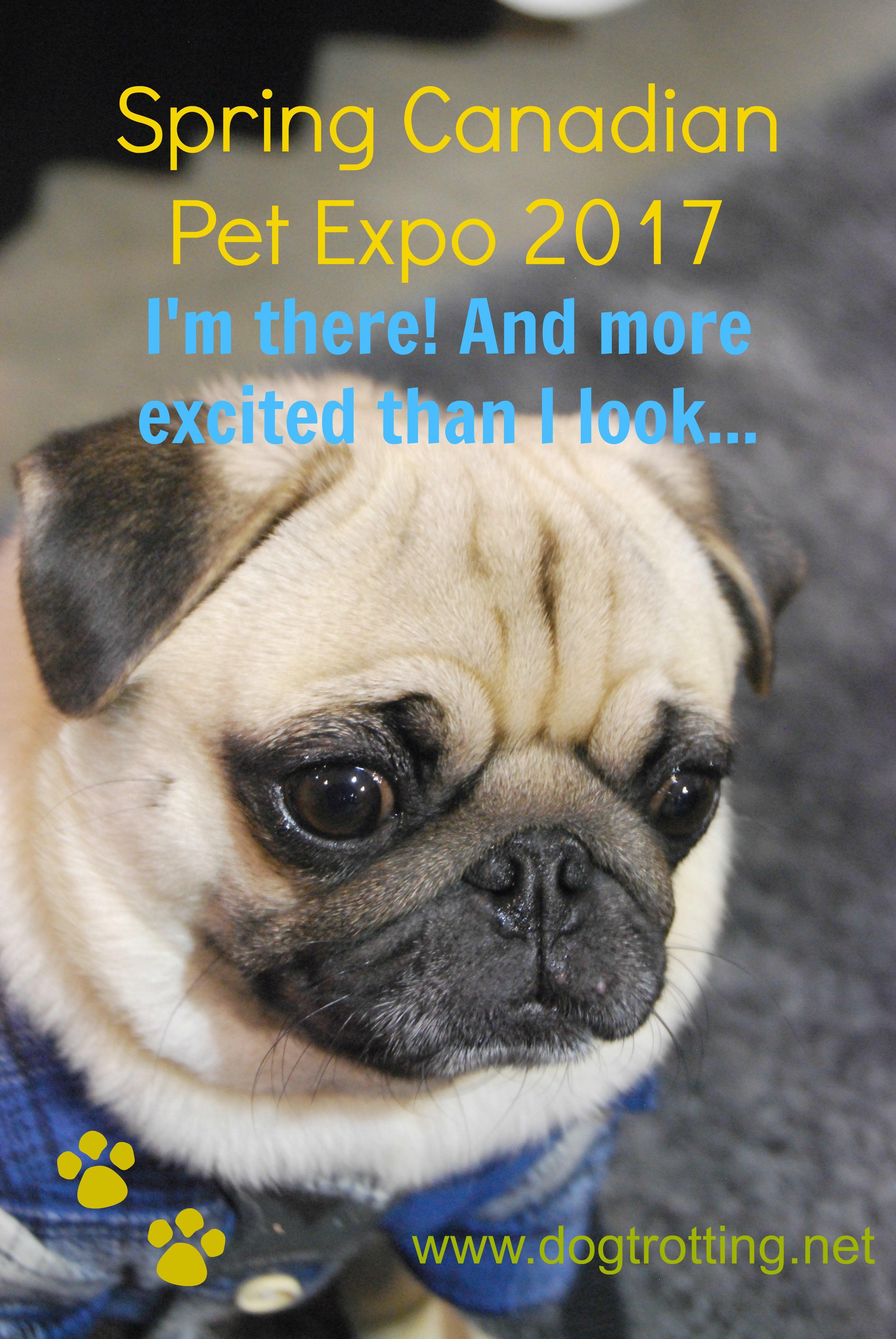 Canadian Pet Expo - pug www.dogtrotting.net