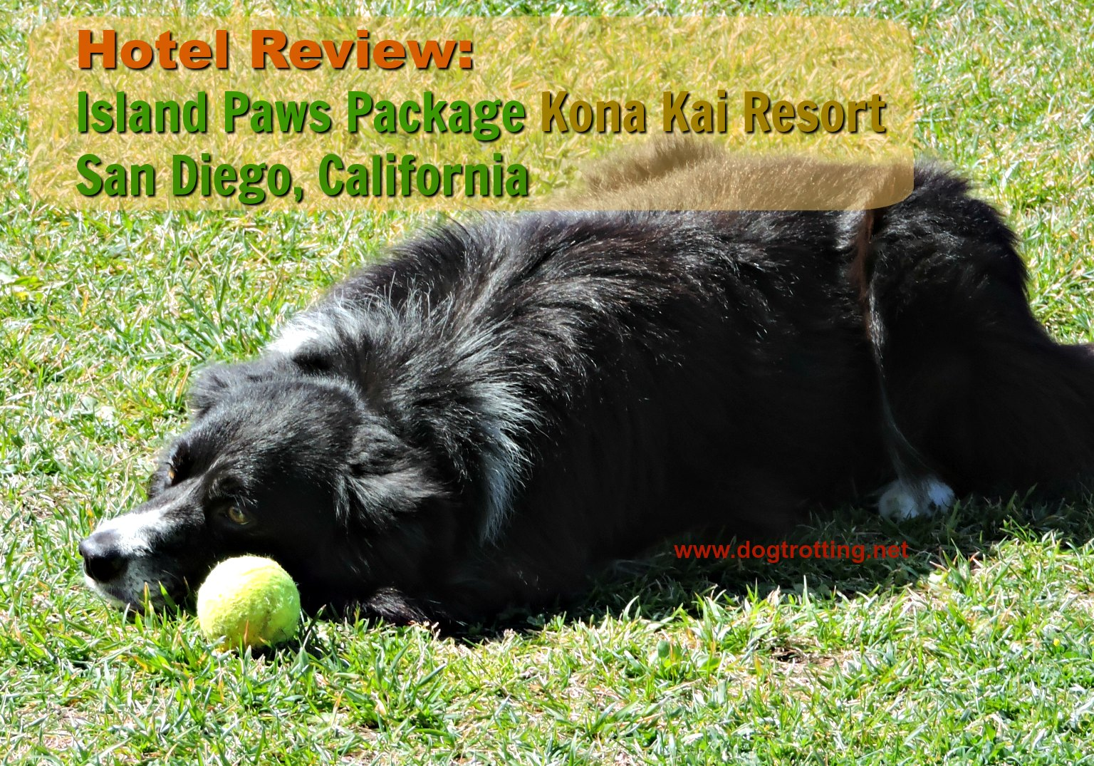 black dog with ball - Kona Kai dog-friendly resort review