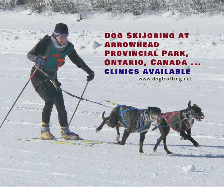 dog skijoring is available at Arrowhead Provincial Park