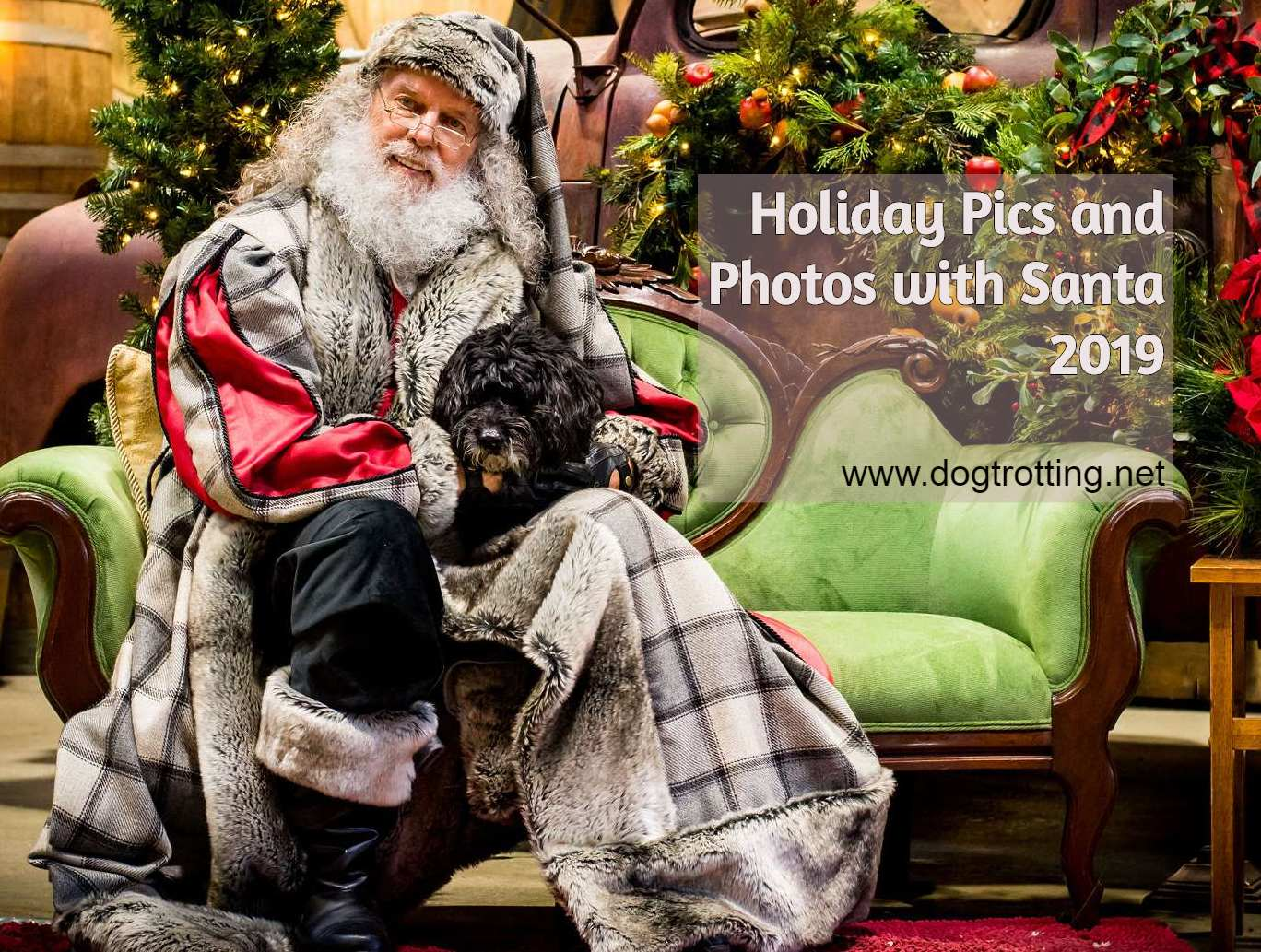 Beautiful black small dog with Father Christmas Holiday Pics with Santa