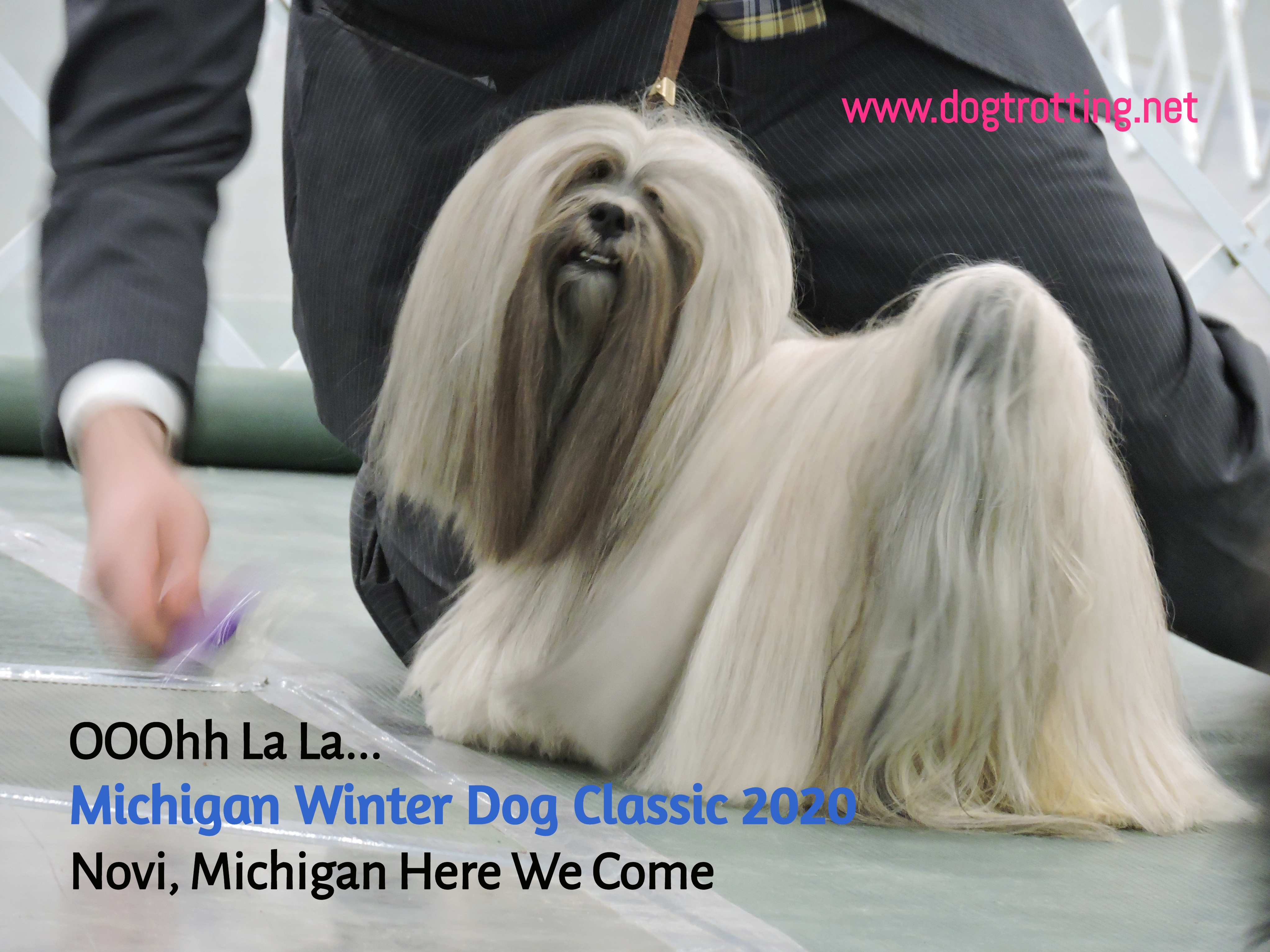Peekineese dog at The Michigan Winter Dog Classic dog show