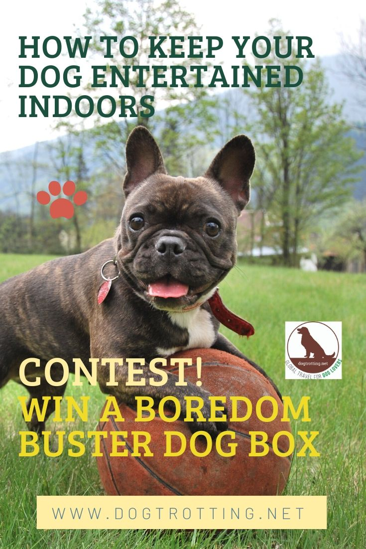 cute small dog on ball with text: how to keep your dog entertained indoors and contest! win a boredom buster dog box