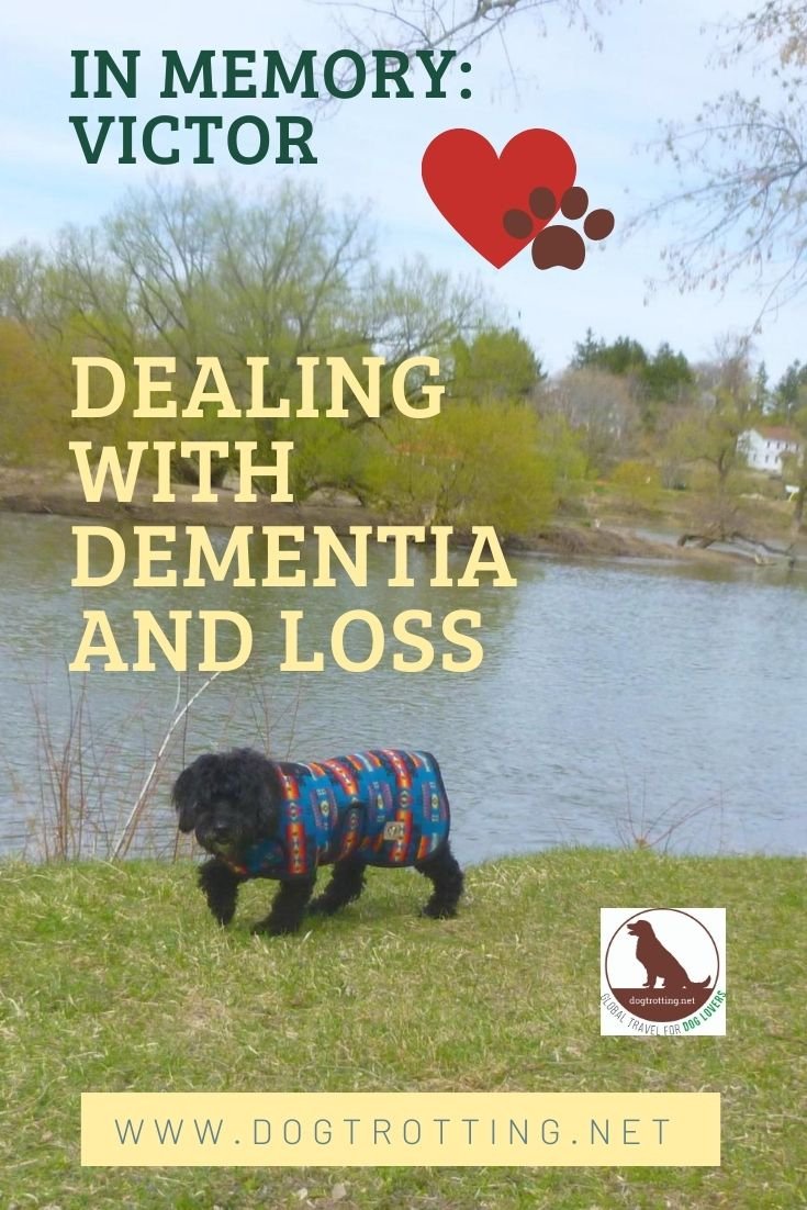 black dog in colourful jacket walking along river text: dementia and loss