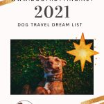 dog dreaming of travelling