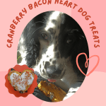 black and white dog eating cranberry bacon dog treat