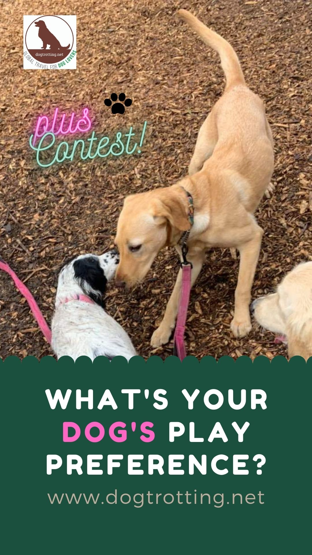 two dogs playing: what's your dog's play preference?
