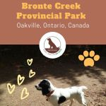 leash free dog zone at Bronte Creek Provincial Park, Oakville, Ontario